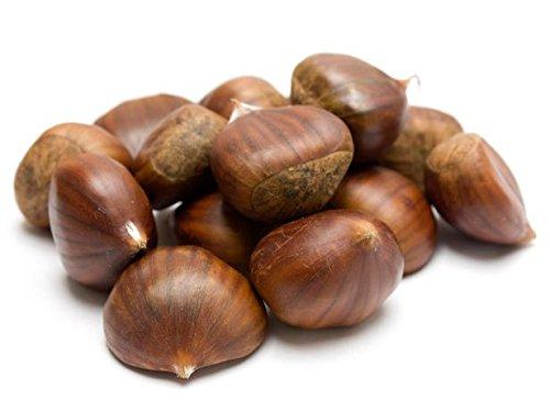Chestnut (Castania)